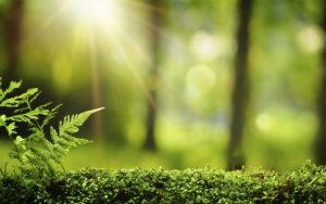 profumazioni per ambiente